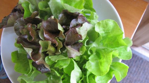 taco salad 001
